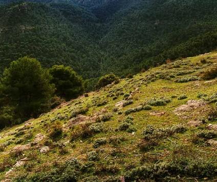 Murcia lanza una App para conocer su oferta de turismo rural - turismo-alojamiento-rural