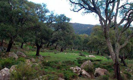 """""""Los Hurones"""" será un complejo de turismo rural"""