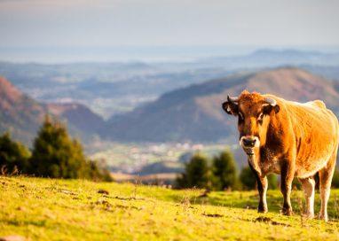 Cantabria apoyará a la Asociación de Turismo Rural