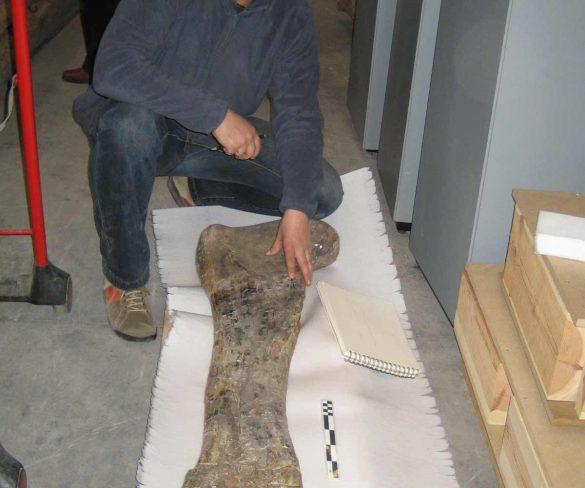 Hallado en Golmayo un dinosaurio de 14 metros y 130 millones de años de antigüedad.