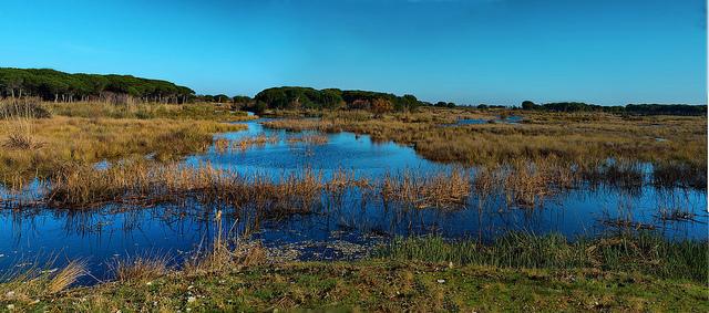 Empresas de Doñana aspiran a lograr la Carta Europea de Turismo Sostenible