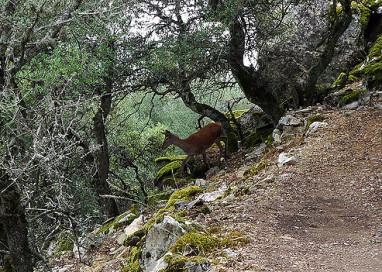 Ecologistas en Acción piden el cierre de monterías en Monfragüe