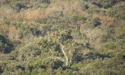 Cabañeros halla un nido de águila imperial