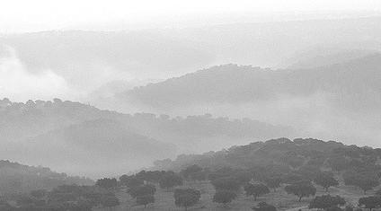 reforestacion parque monfrague