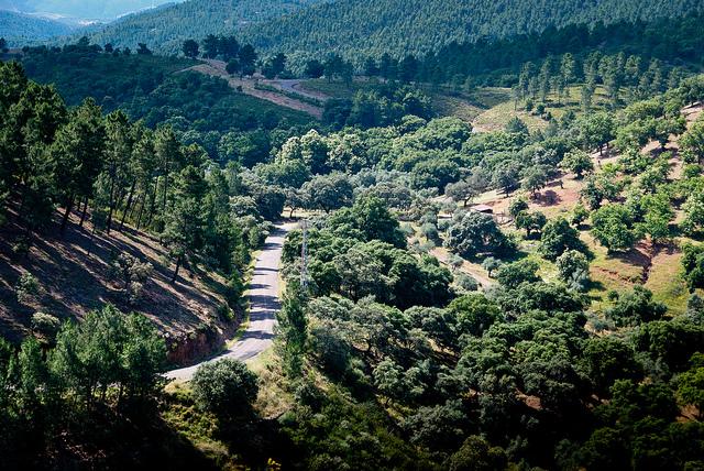 Sierra de Aracena, contra la seca de encina, alcornoque y castañar