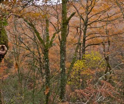 Tabeirós-Terra de Montes prevé buenos datos de turismo rural con la Rapa das Bestas - turismo-alojamiento-rural