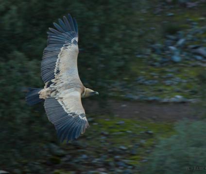 turismo ornitologico