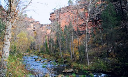 Parque Natural del Tajo, nueva Reserva de la Biosfera
