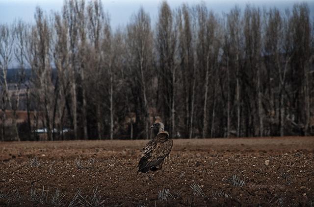 Castilla y León participa en la mayor feria de turismo ornitológico
