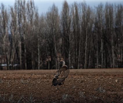castilla y leon turismo ornitologico