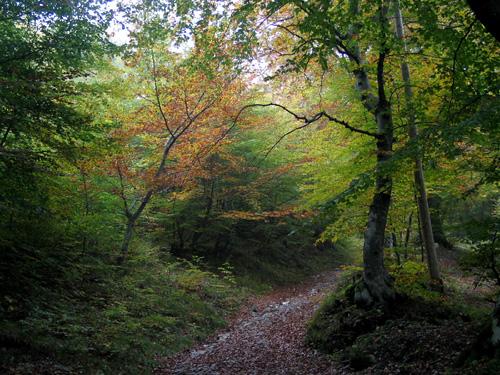 """Lario organiza la """"Monte Ranedo Trail"""""""