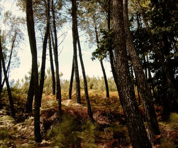 "Alternativa ""eco"" en Extremadura"