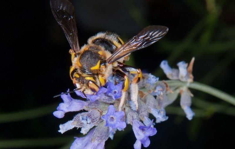 La miel de Liébana con denominación de Origen