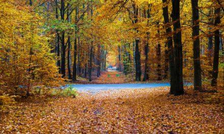 Ranking de comunidades de WWF según los planes de gestión de los espacios protegidos