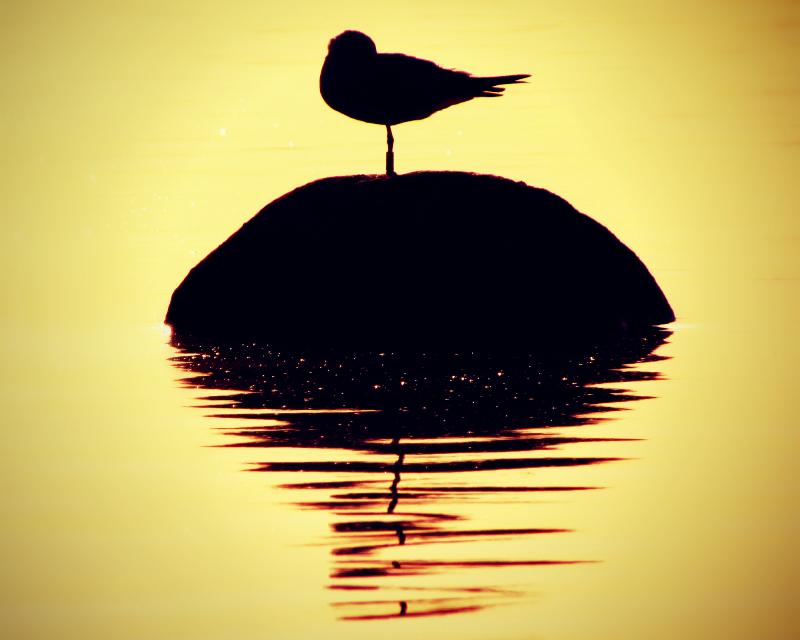 Turismo ornitológico en la provincia de Málaga