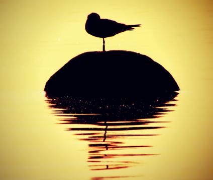 Turismo Ornitológico en la provincia de Málaga - naturaleza