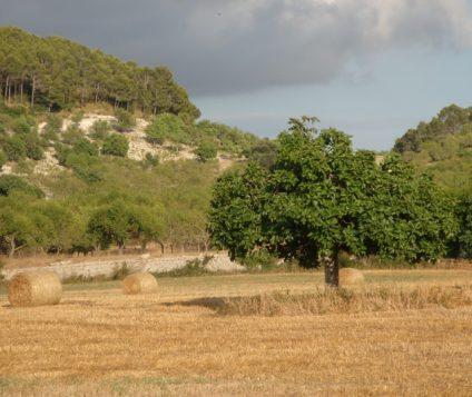 Tres Rutas para Vivir Lloret de Vistalegre - turismo-activo