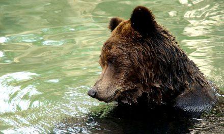 Consejos para la observación de la fauna salvaje