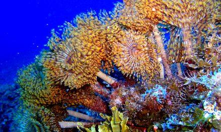 Un parque nacional marino para El Hierro, la iniciativa de WWF