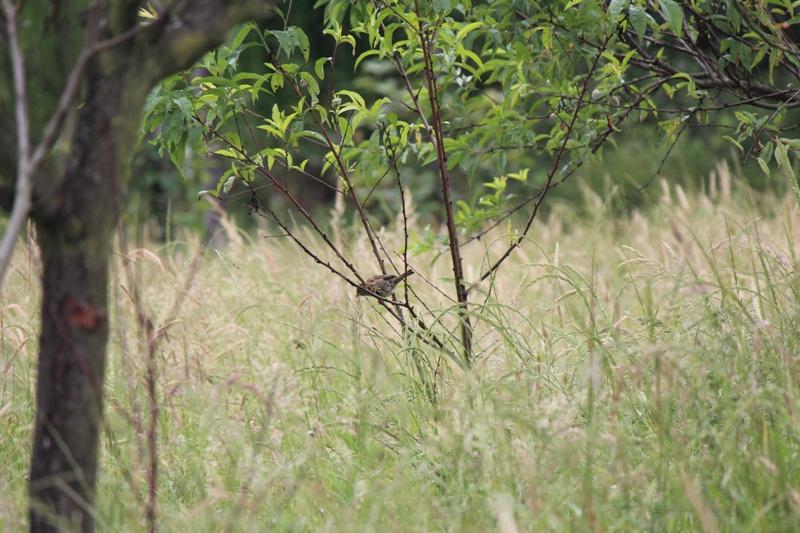 Langreo promociona su zona rural