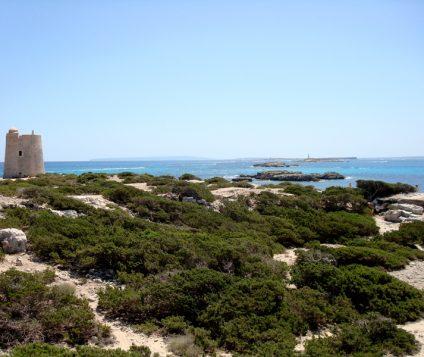 El Parque Natural de ses Salines necesita más protección - naturaleza