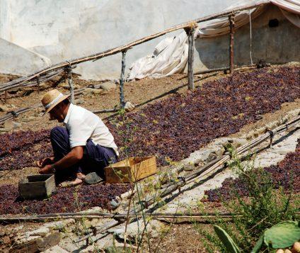 Rutaxar, una ruta para conocer la uva pasa - gastronomia-restaurantes