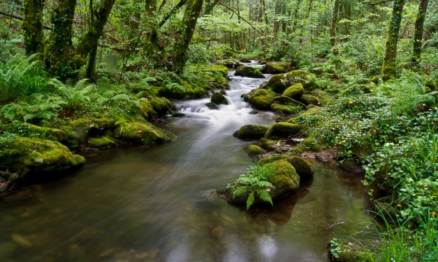 El Parque Natural Las Fragas do Eume contará con un Plan Rector que regirá sus usos