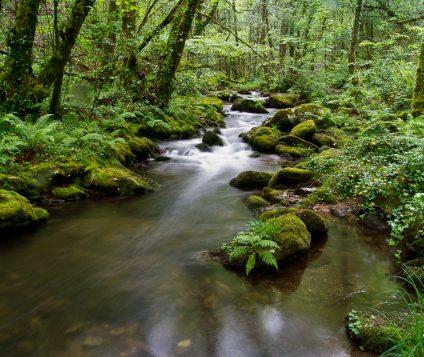 El Parque Natural Las Fragas do Eume contará con un Plan Rector que regirá sus usos - naturaleza