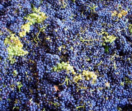 La Denominación de Origen de Arlanza recogerá menos uva pero tendrá mucha calidad - gastronomia-restaurantes
