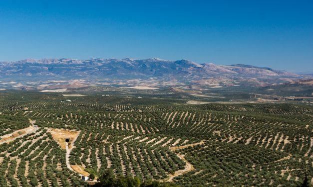 Resultado positivo en la XVI edición de  la Feria de Turismo Interior de Andalucía «Tierra Adentro»