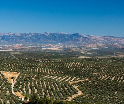 """Resultado positivo en la XVI edición de  la Feria de Turismo Interior de Andalucía """"Tierra Adentro"""" - turismo-activo"""