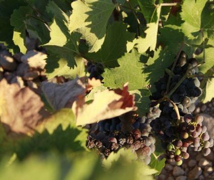 Este jueves se presentan los mejores vinos de Jumilla - gastronomia-restaurantes