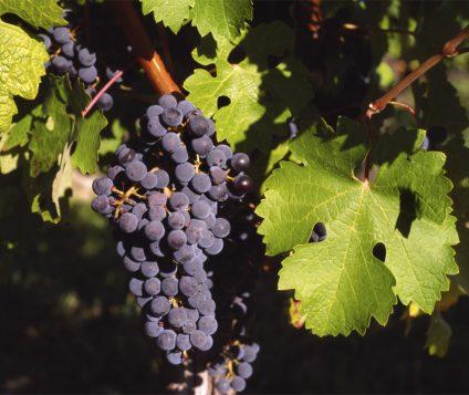 Denominación de Origen Valdepeñas lanza el primer vino espumoso - gastronomia-restaurantes