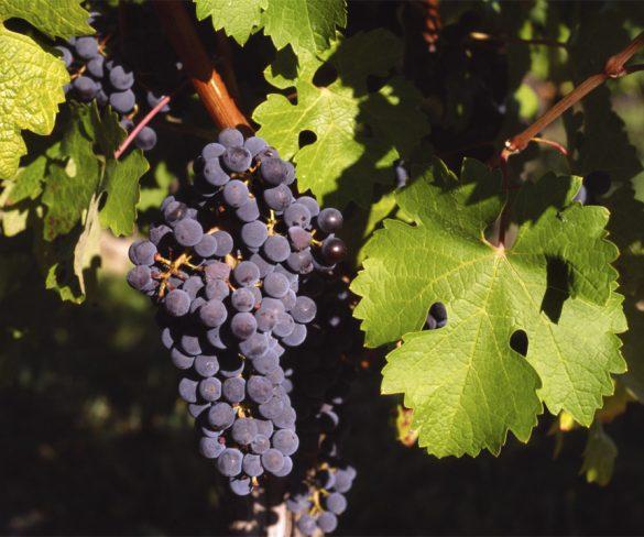 Denominación de Origen Valdepeñas lanza el primer vino espumoso