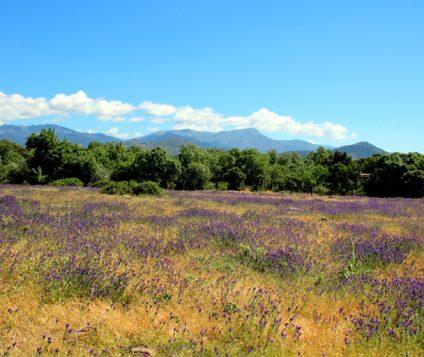 El Parque Nacional de la Sierra de Guadarrama uno de los lugares favoritos para los turistas. - naturaleza