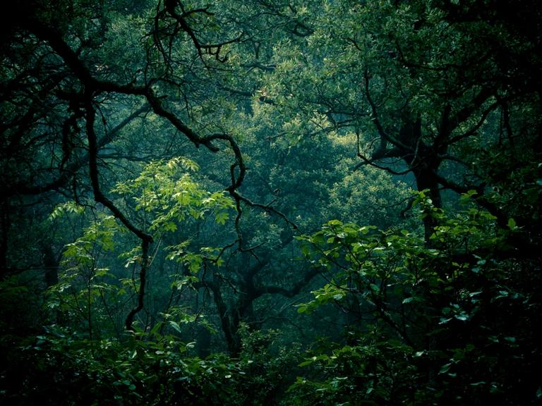 El Parque Natural de la Font Roja foco de estudio sobre el cambio climático