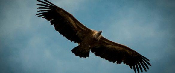 El turismo ornitológico adquiere presencia en Sobrarbe y en el Parque Nacional de Ordesa y Monte Perdido - naturaleza, centenario-ordesa