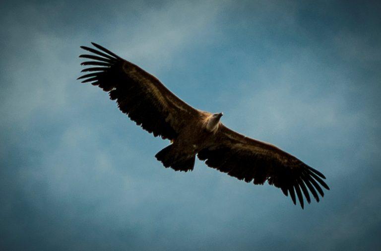 El turismo ornitológico adquiere presencia en Sobrarbe y en el Parque Nacional de Ordesa y Monte Perdido