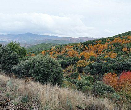 """El Bierzo impulsa su riqueza natural con la iniciativa """"Foresta y Templarios del Bierzo"""" - naturaleza"""