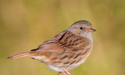 La Diputación de Málaga presenta la web de turismo ornitológico Birding Málaga