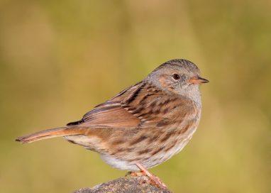La Diputación de Málaga presenta la web de turismo ornitológico Birding Málaga.