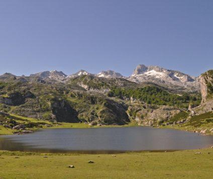 Los Picos de Europa acogerán a 7 ejemplares quebrantahuesos - naturaleza, centenario-picos-de-europa