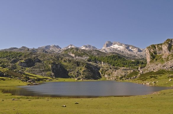 Los Picos de Europa acogerán a 7 ejemplares quebrantahuesos