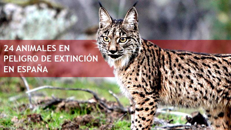 Resultado de imagen de 17 de mayo día de las especies en peligro...