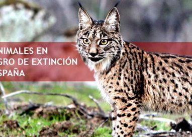 23 Animales en peligro de extinción en España
