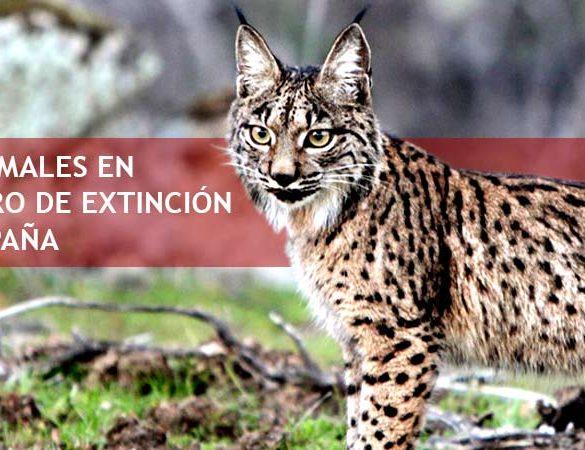 Especies Animales en Peligro de Extinción en España