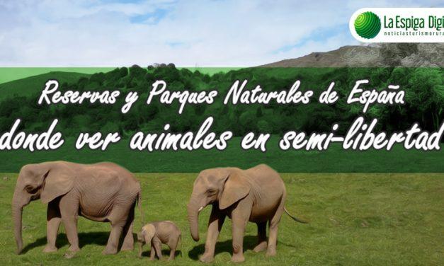 Reservas y parques naturales donde ver animales en semi libertad en España