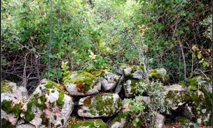 15 rutas digitales para conocer el Parque Nacional Sierra de Guadarrama