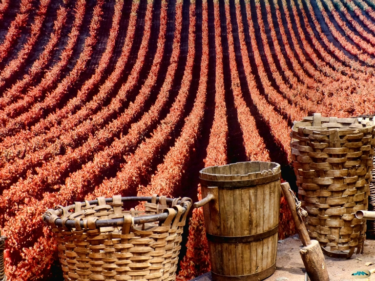 La D.O. Ribeira Sacra prevé disponer de 6 millones de kilos de uva
