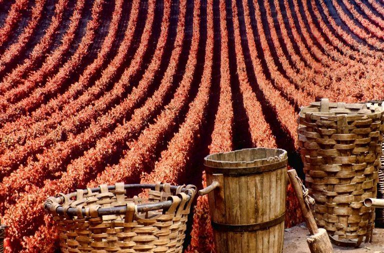 La D.O. Ribeira Sacra prevé disponer de 6 millones de kilos de uva.